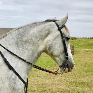 Glitter Goddess My Horse